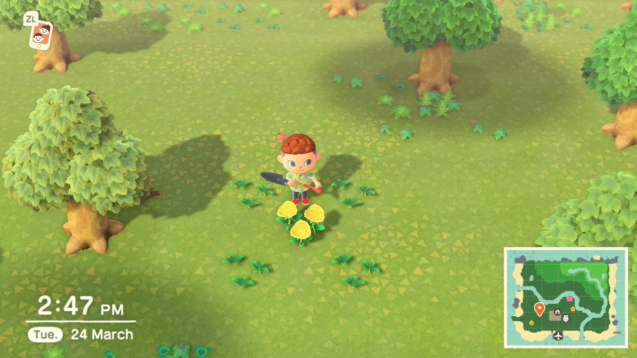 How to make hybrid flowers in Animal Crossing: New Horizons