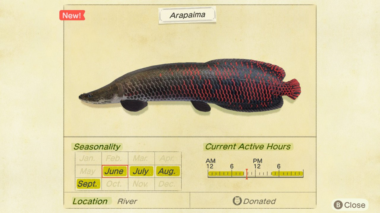 How to catch arapaima in animal crossing new horizons