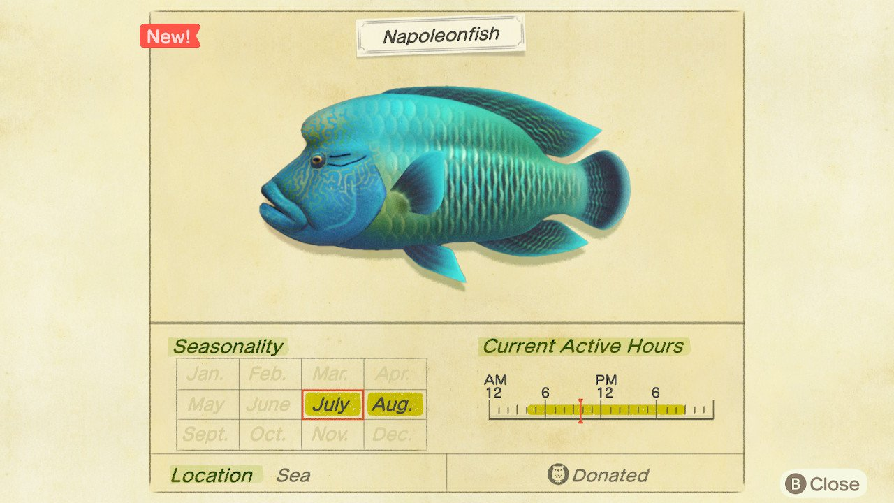 How to catch Napoleonfish in Animal Crossing: New Horizons